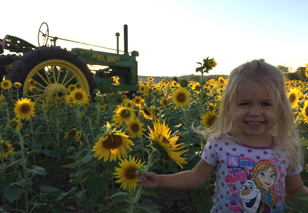 Check Out Our Sunflower Field